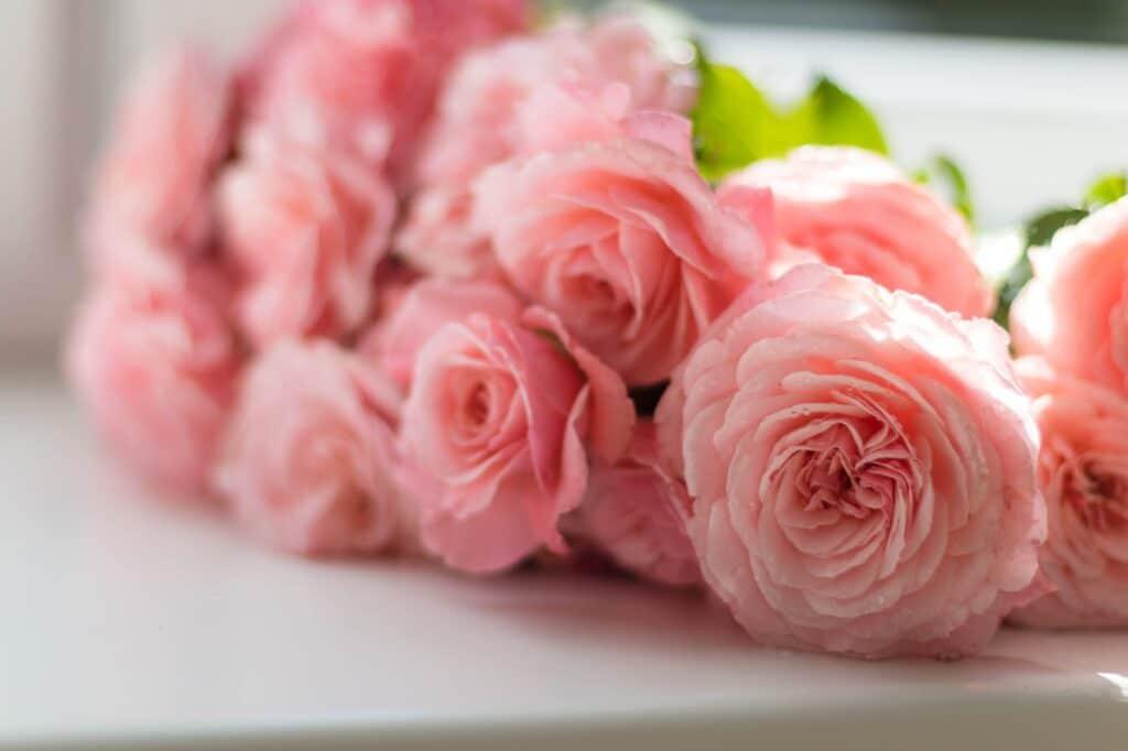 Rosas o margaritas para tener en casa